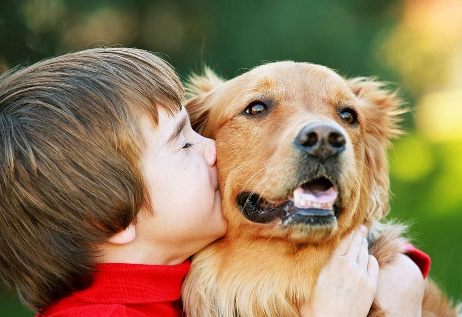 Покупать или не покупать собаку?