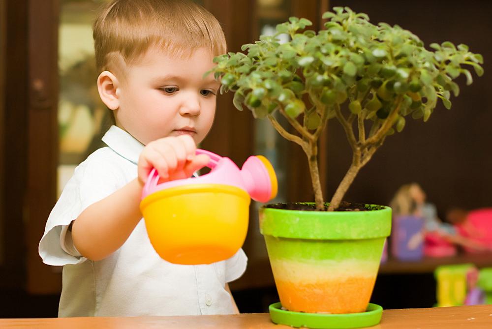 5 комнатных растений, опасных для детей